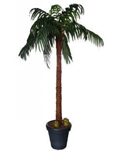 Verhuur:  Kunst palmboom +- 3,50 m hoog